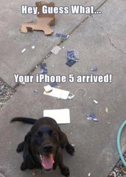 Arschlochtiere hund zerstört iphone