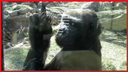 Arschloch Affe