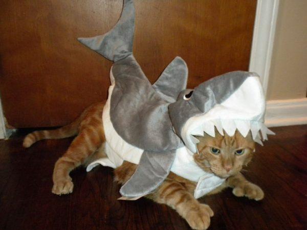 cat-halloween12