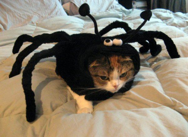 cat-halloween16