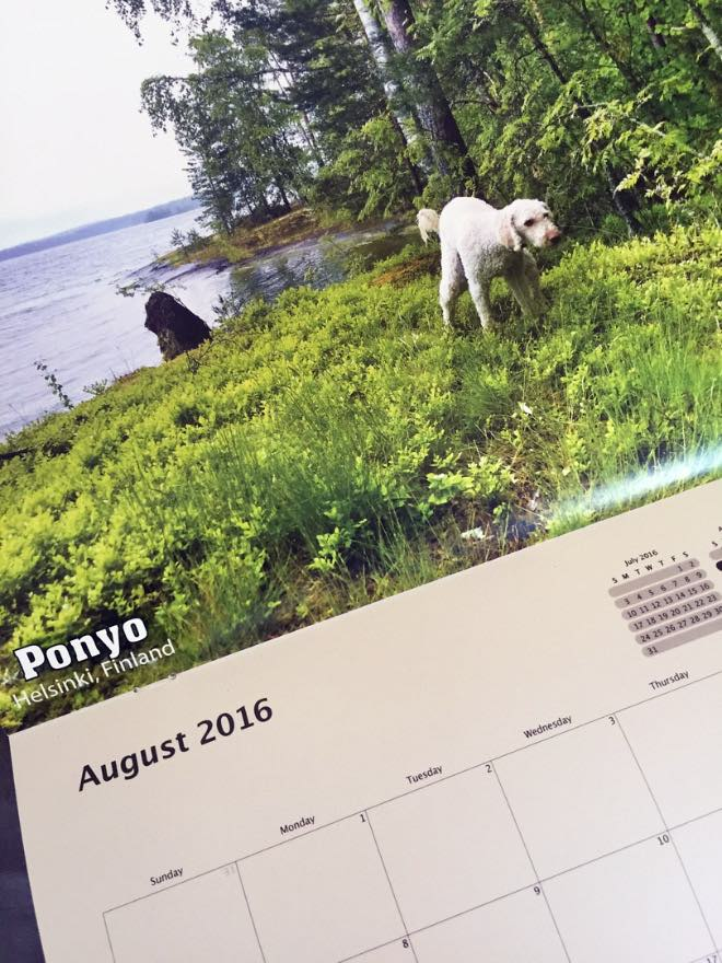 Kackende Hunde Kalender