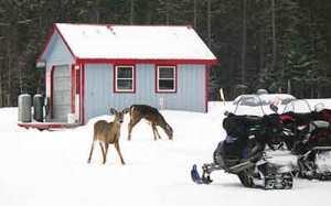 Pine Lodge Hunting Camps