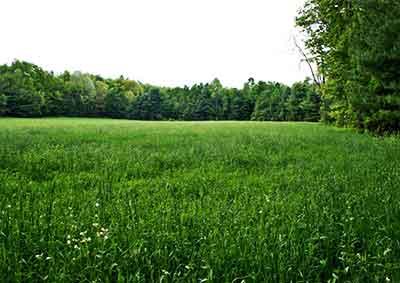 Alderbrook-Meadow-Sanctuary-Northfield