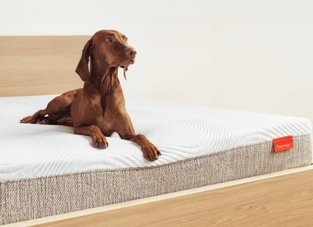 edge support of tomorrow mattress