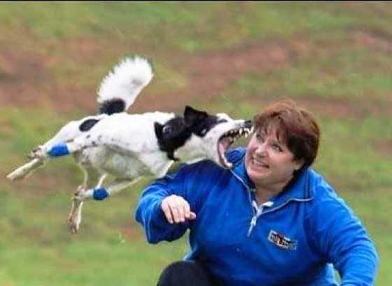 This enthusiastic dog trainer.