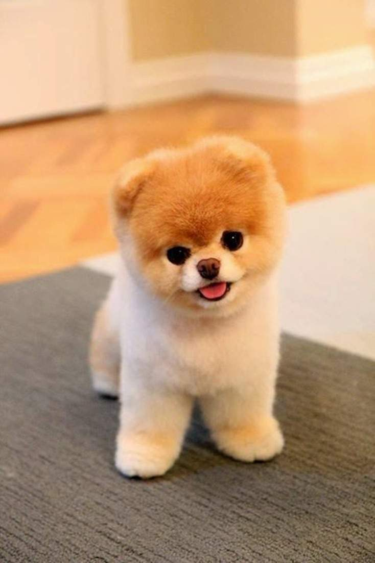10 Absolutely Adorable And Cute Funny Animals 1