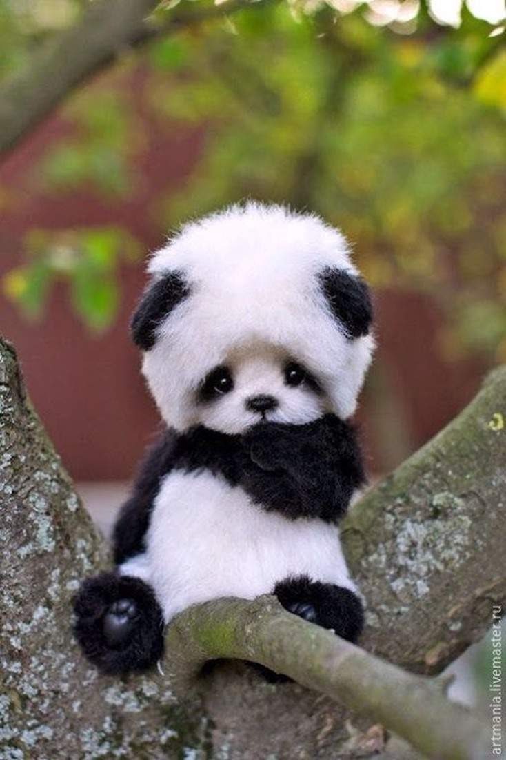 10 Absolutely Adorable And Cute Funny Animals 2