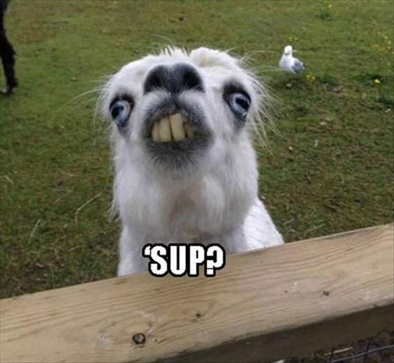 10 Funny Animals Memes For You to Laugh 5