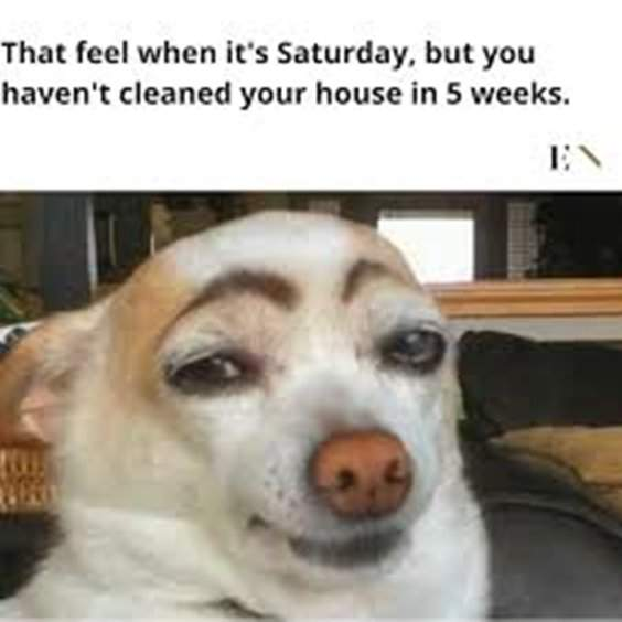 10 Funny Animals Memes For You to Laugh 7