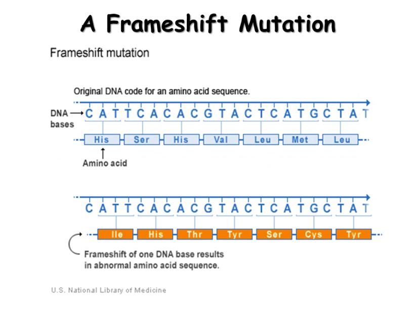 Frameshift Mutation | Allframes5.org