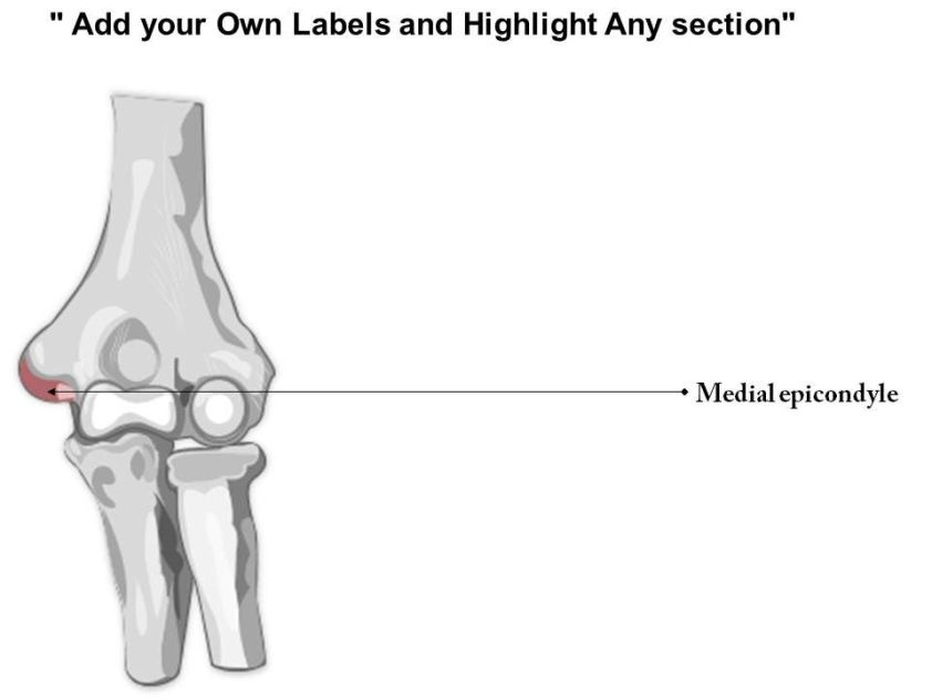 0514 Human Anatomy Elbow Anterior View Medical Images For ...