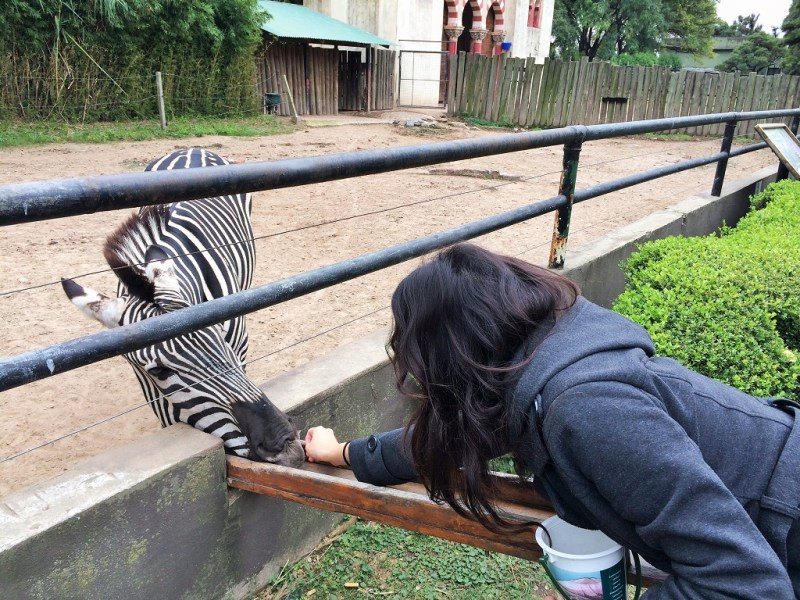 I have never been so close to a zebra!