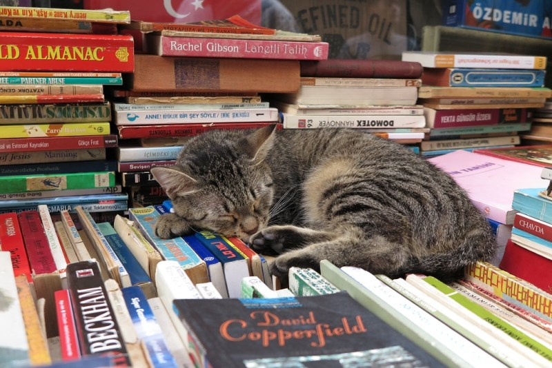 sleepy kitty on a stack of books