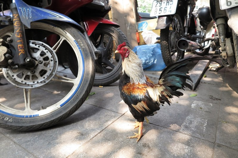 no big deal... just sipping on coffee at a cafe and hanging with a chicken