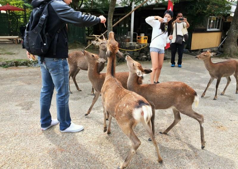 Nara deer 6