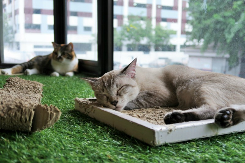 purradise cat cafe 13