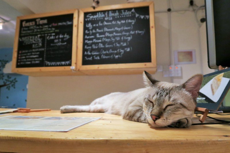 purradise cat cafe 14