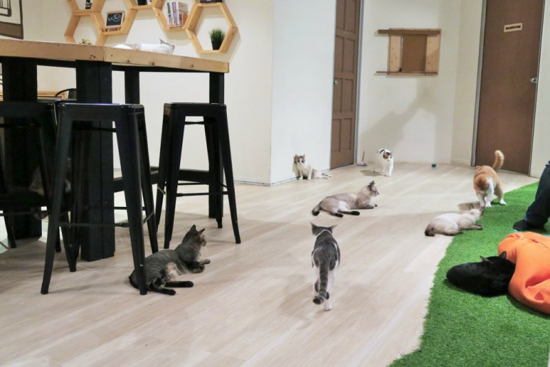 purradise cat cafe 3