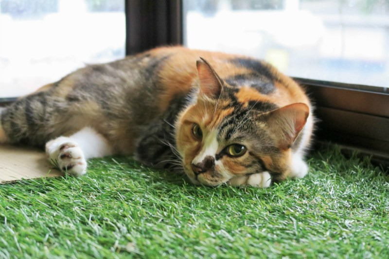 purradise cat cafe 4