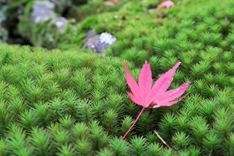 hakone-art-museum-moss-garden-4