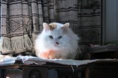 Beijing - grandma's cat