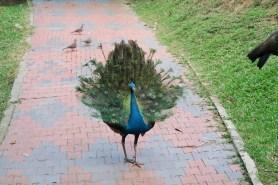 Kuala Lumpur - Bird Park