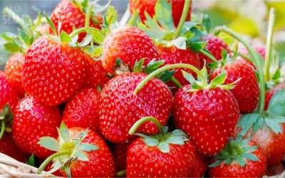 Aardbeien bewaren, hoe kun je dat het beste doen?