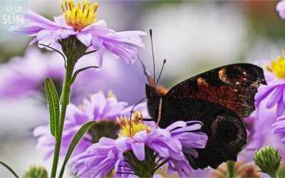 Tuinkalender oktober, wat valt er deze maand te doen?