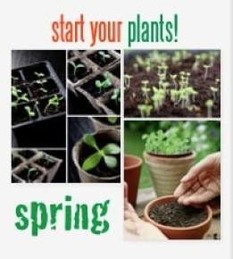 start your plants
