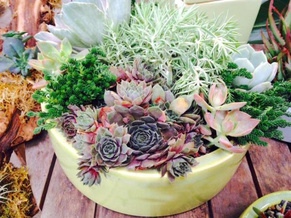 succulent custom planter aug4