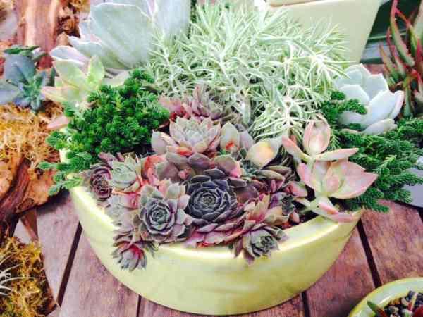succulent custom planter aug4