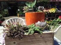 succulent custom planter