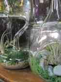 1. Tillandsia in glass ornament