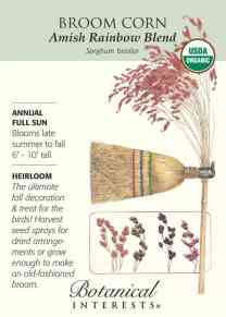 Amish Rainbow Broom: Corn The ultimate fall decoration, broom material, and treat for the birds!
