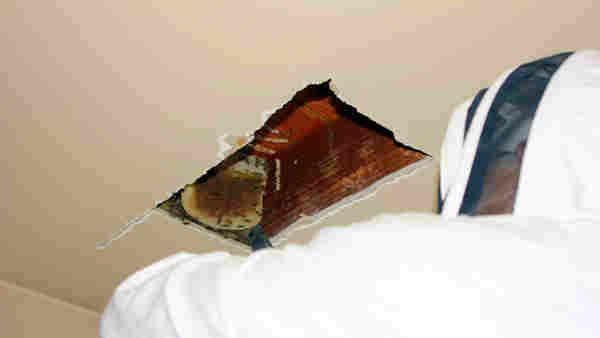 pčele strop