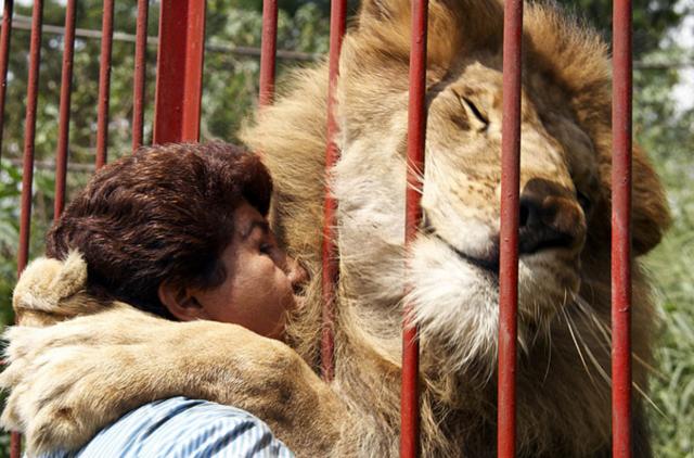 lionrescue02-640x422