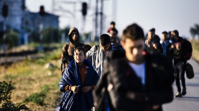 imigranti vojvodina