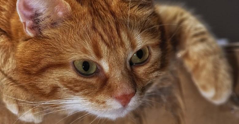 КОНЕЧНО ДОКАЖАНО  Cat-3969742_960_720