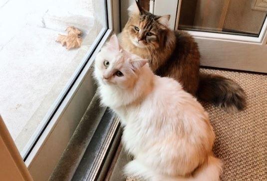 Откриена вакцина против алергија на мачки