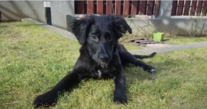 Американски пилот спасил повредено куче во Скопје, па го однел во САД (ВИДЕО)
