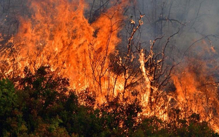 Голем пожар во Таор, гори сува трска