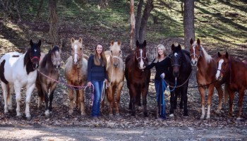Getting to the Heart of Riding Lessons