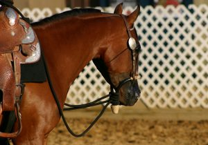 The Arabian Horse Story Collection | SLO Horse News