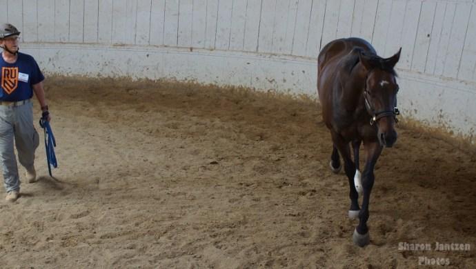 Horses Help Heal People Emotionally – Horse Sense & Healing  | SLO Horse News