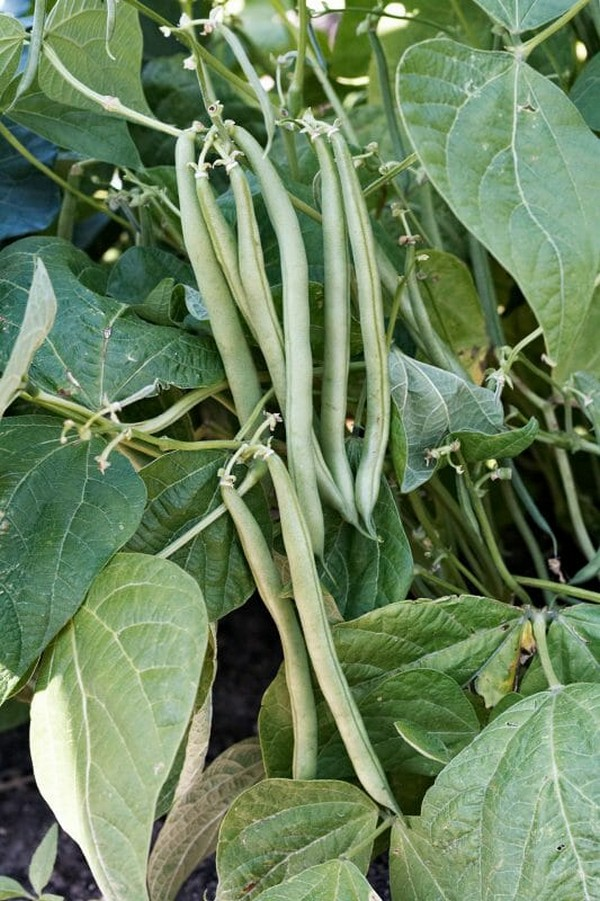summer vegetables to grow