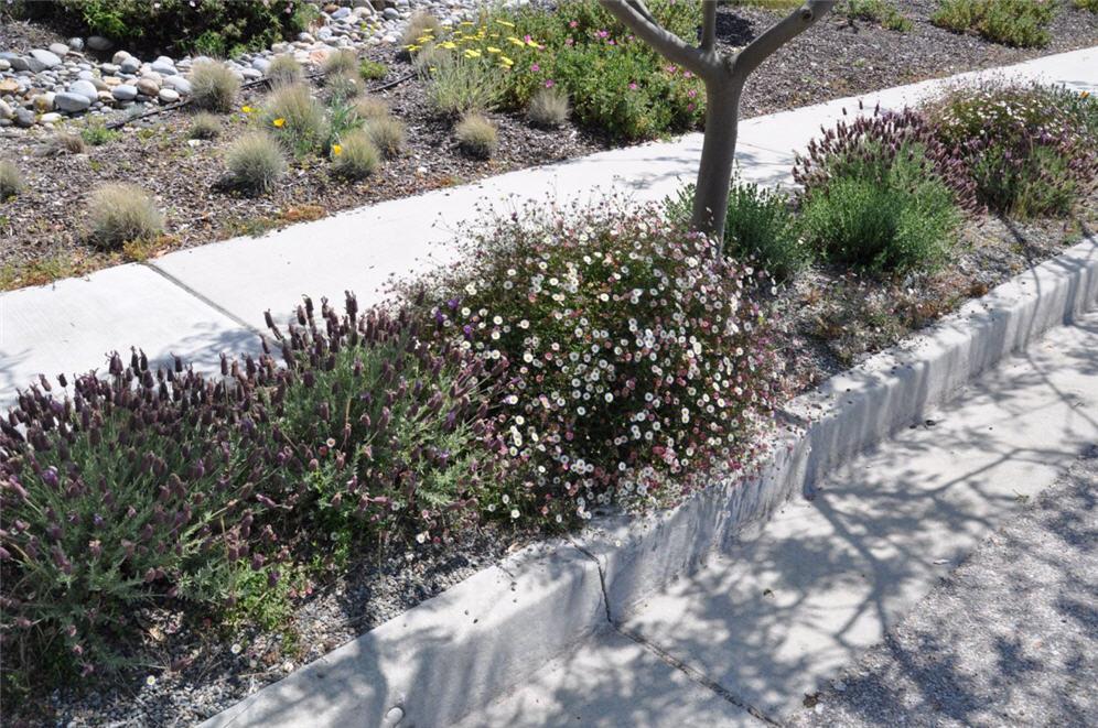 Rock Landscaping White