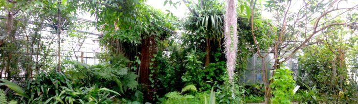 sobota_botanicka_zahrada
