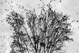The Birds © Dale Niles