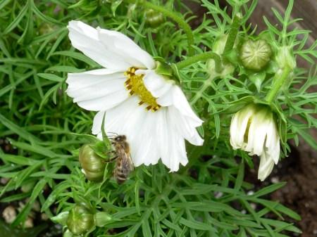 Garden-Bee