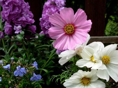 Garden-Variety